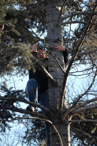oh yeah, I climbed a tree!